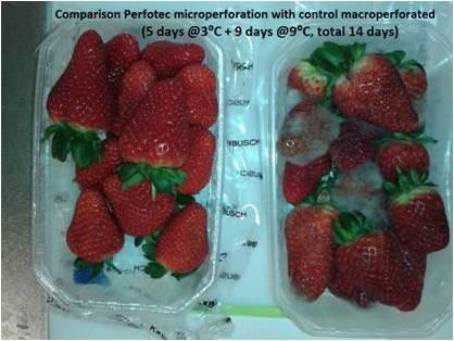 Mejoras de calidad en fresa y otras berries envasadas en EMAP con el sistema PERFOTEC otr control
