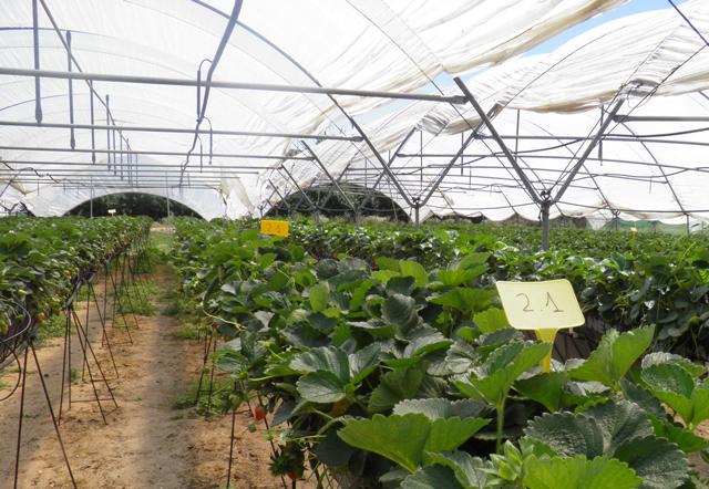 ADESVA investiga el sistema de recirculación de los drenajes para optimizar el uso de los recursos